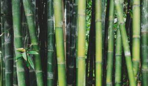 Environmentally friendly bamboo